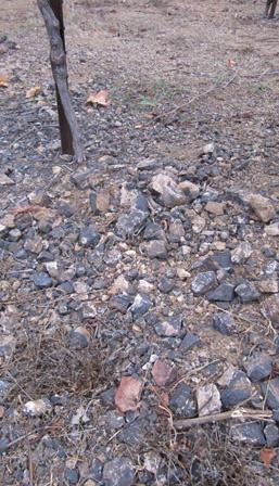 Pey-Marin Vineyards - Marin County Vineyard Soil